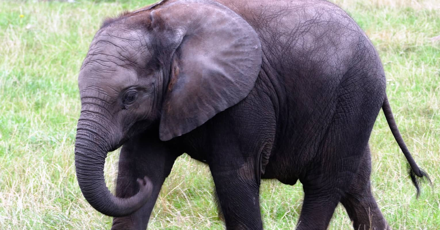 Heartwarming video shows the moment the 'world's loneliest elephant' makes his first friend in years